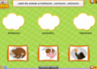 Food chain | Recurso educativo 80218
