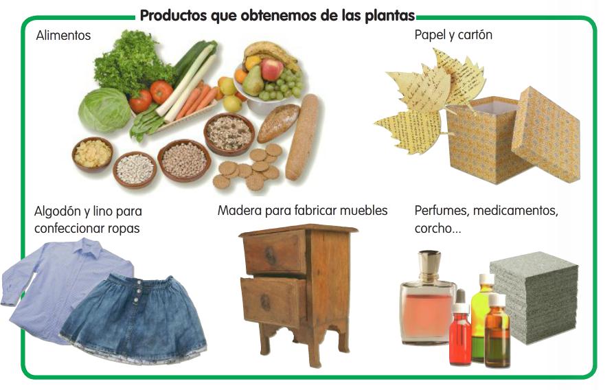 Productos que obtenemos de las plantas recurso educativo for Utilidad de las plantas ornamentales